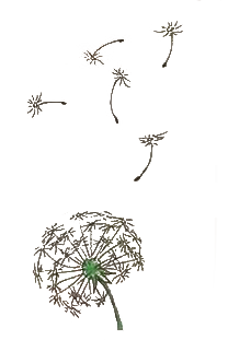 hand drawing of dandelion blowing in the wind