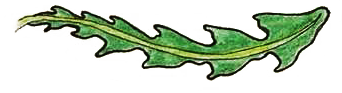 hand drawing of tattered leaf