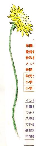 hand illustration of long elegant dandelion